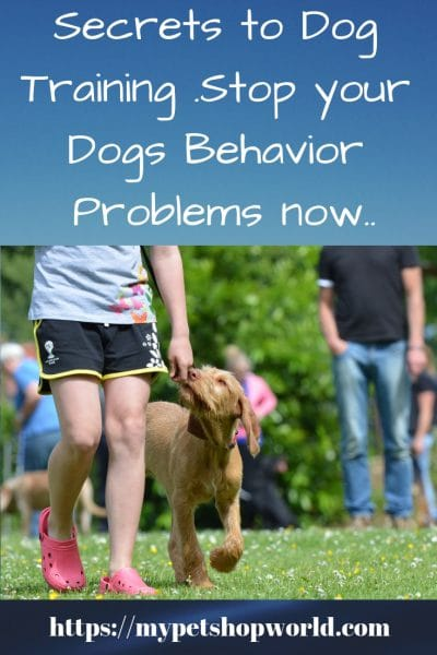 stop your dogs behavior problems now