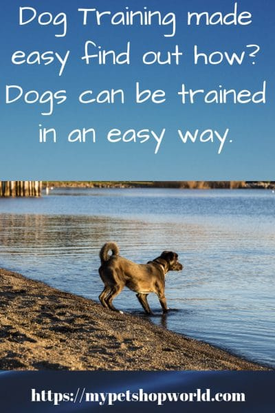 The secret to train your dog any time
