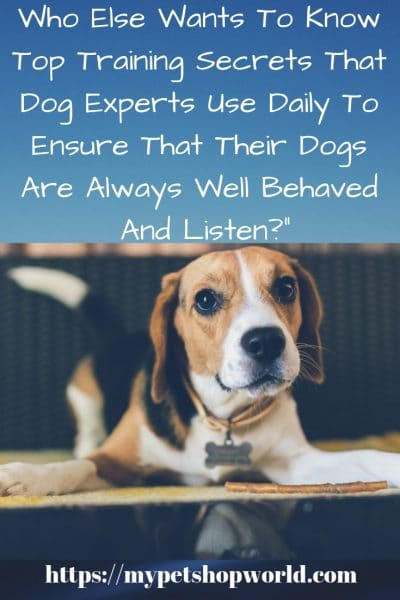 Top Dog Training Tips for your Dog