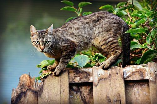 Abby the grey Tabby Cat