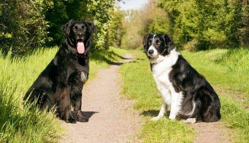 Dog Training teach your dog how to walk heel