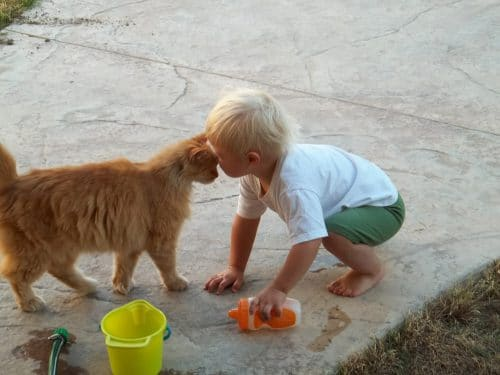 Kids and cats can play in harmony together