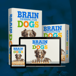 Give your dog some brain training