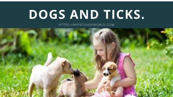 Pets and Ticks