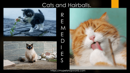 Cat and Hairballs