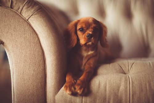 Behaviour Problems with dogs