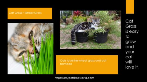 Cat Grass and Cat Bamboo