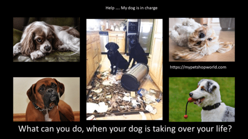 dogs and training