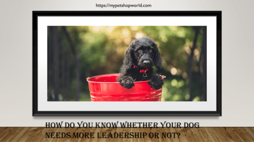 dog's and Leadership