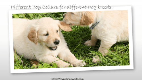 Different Dog Collars for our dogs