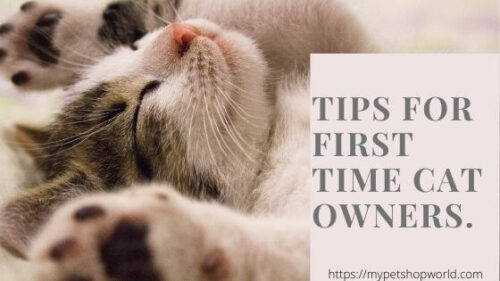 First time cat owner tips