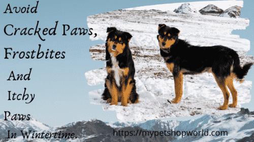 cracked dog paws