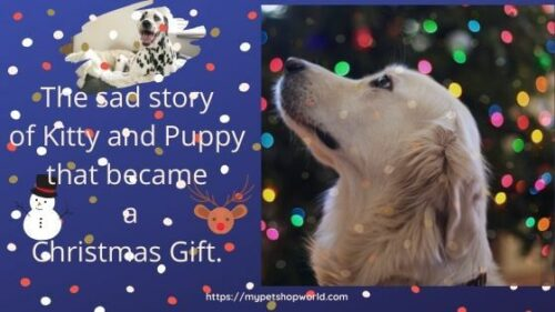 The christmas story of Kitty and Puppy