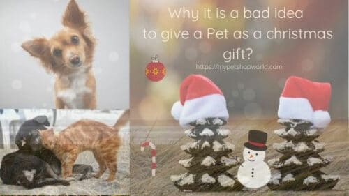 A pet is not a Christmas Gift