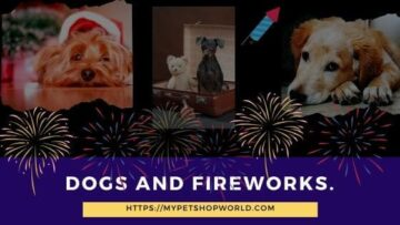 Dogs and Fireworks how to calm them down