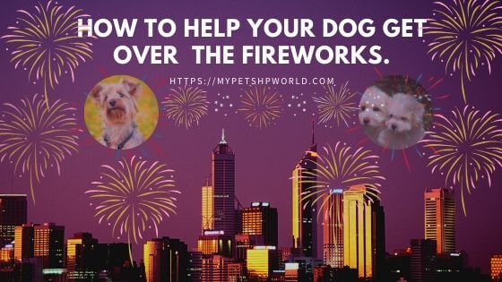 why dogs are afraid of fireworks