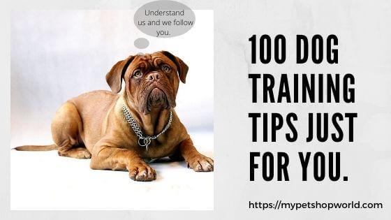 100 Tips for Dog Training best Check List