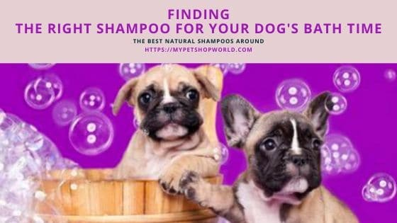 what is the best puppy shampoo