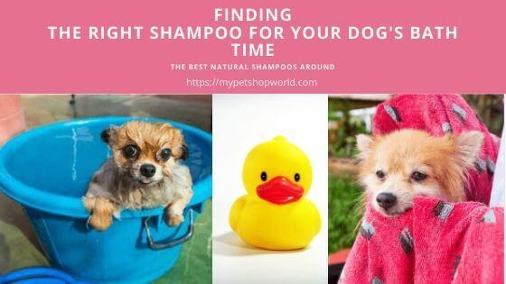 Dog Shampoos and Conditioners